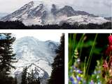 Link to Mount Rainier National Park
